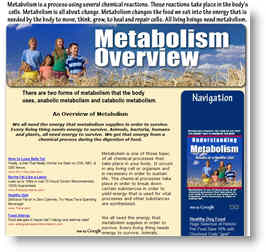 metabolism, fat, muscle and diet
